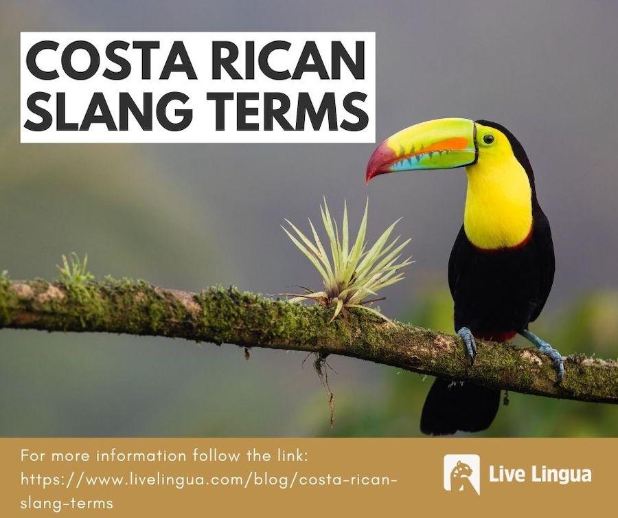 costa rican slang terms