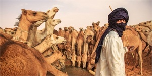 Peace Corps-Arabic (Mauritanian) Language Lessons - Image